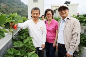 右至左:興大植病系黃振文教授、植保科基金會董事長葉瑩、名芫農場老闆張裕淇,觀察草莓生長情況