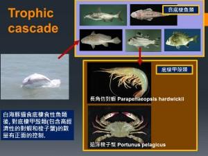 白海豚與中、上營養階層魚類,及其他食浮游生物與食底棲動物魚類及蟹、蝦等大型高經濟價值無脊椎動物之食物鏈