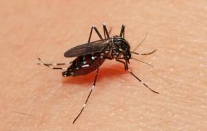 蚊子在世界各國都是重要的防疫對象,攝影江允中。