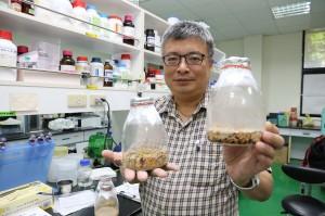 興大森林學系王升陽特聘教授展示固態培養牛樟芝菌絲體.jpg