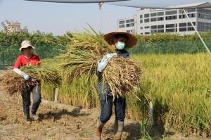 興大特殊選才 10農業學系(組)優先錄取農家子弟2