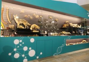 興大生科院生態櫥窗,展示生科系老師珍藏標本